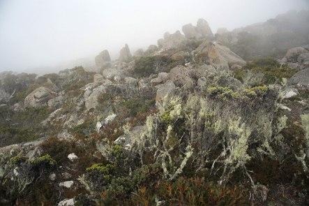 Pauline Buzaré Mt Wellington Tasmania